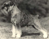 Ch Trixer Oppenheimer, owner Trixer Kennel